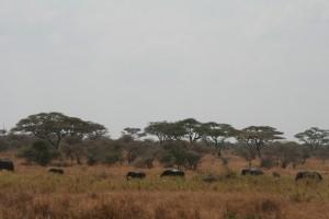20130809-kenya_tanzania-0780