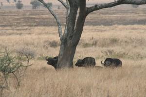 20130809-kenya_tanzania-0787