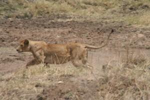 20130809-kenya_tanzania-0806