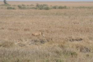 20130809-kenya_tanzania-0812
