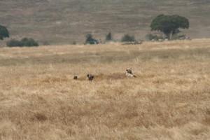 20130809-kenya_tanzania-1076