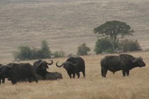 20130809-kenya_tanzania-1080