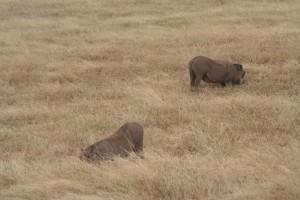 20130809-kenya_tanzania-1086