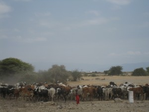 20130809-kenya_tanzania-1213